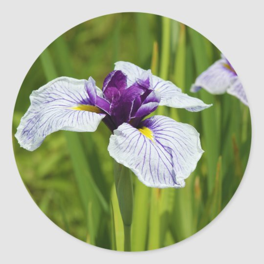 Japanese Iris Ensata Thunb Flowers Classic Round Sticker