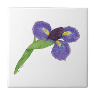 Japanese Iris (Iris ensata) Tile