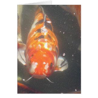 Japanese Koi Fish Greeting Card