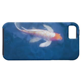 Japanese koi fish in pond, high angle view iPhone 5 case
