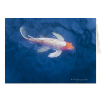 Japanese koi fish in pond, high angle view greeting card