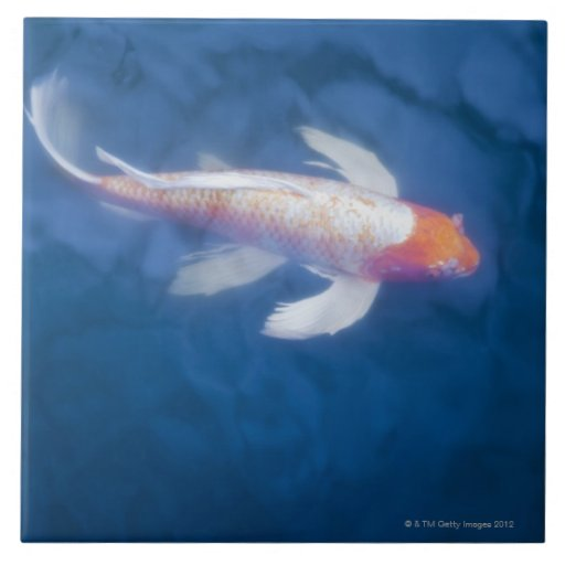 Japanese koi fish in pond high angle view tiles zazzle for Japanese koi company