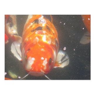 Japanese Koi Fish Postcard