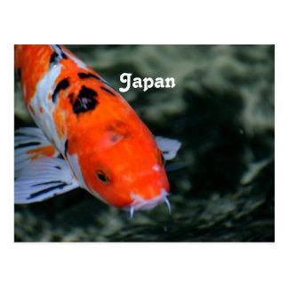 Japanese Koi Post Cards