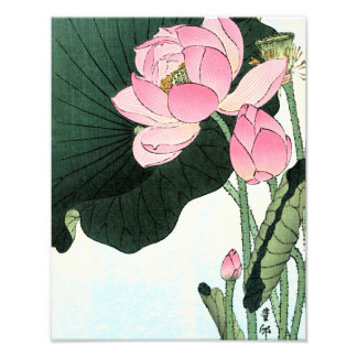 JAPANESE LOTUS FLOWER Photo Enlargement