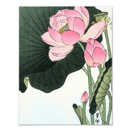 JAPANESE LOTUS FLOWER Photo Enlargement