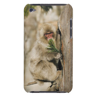 Japanese Macaque Climbing Tree, Eating Leaves iPod Touch Case