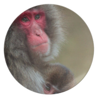 Japanese Macaque Monkeys Plate