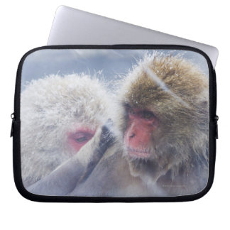 Japanese Macaques (Macaca fuscata) Grooming in Laptop Sleeve