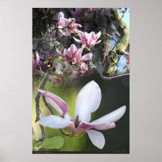 Japanese Magnolia 2 Poster