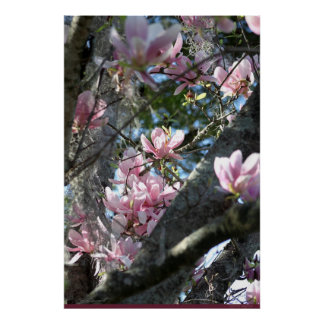 Japanese Magnolia Poster