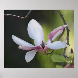 Japanese Magnolia Print
