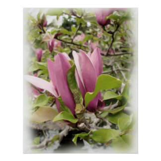 Japanese Magnolias - Digital Watercolor Print