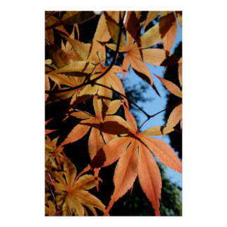 Japanese Maple (2) - Floral Photography Poster