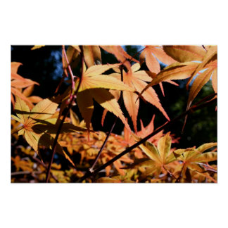 Japanese Maple 3 Floral Photography Poster