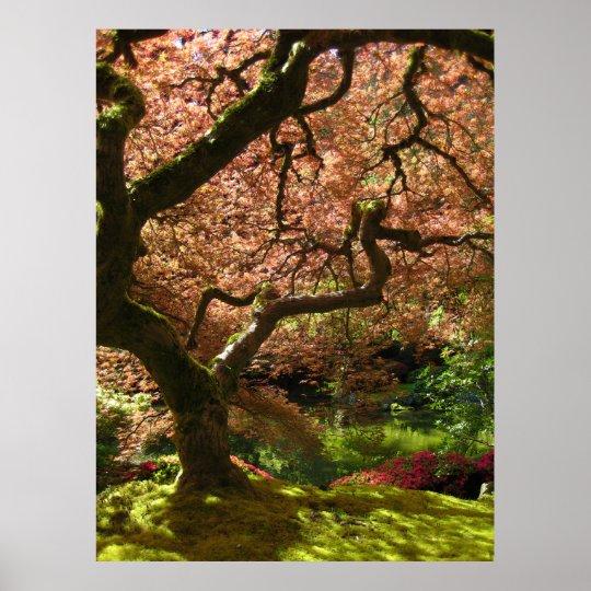 Japanese Maple Acer Palmatum Portland Garden Poster