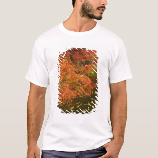 Japanese maple in fall color 2 T-Shirt