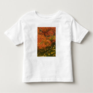 Japanese maple in fall color 2 toddler T-Shirt