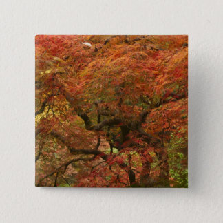Japanese maple in fall color 4 15 cm square badge