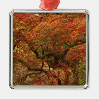 Japanese maple in fall color 4 christmas ornament