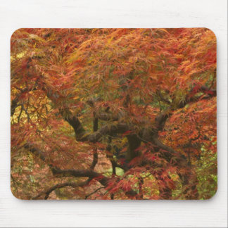 Japanese maple in fall color 4 mouse mat