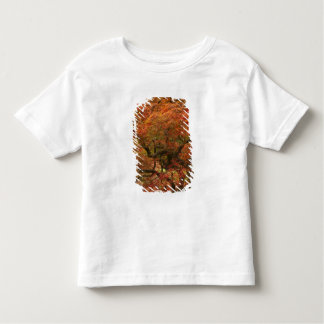 Japanese maple in fall color 4 toddler T-Shirt