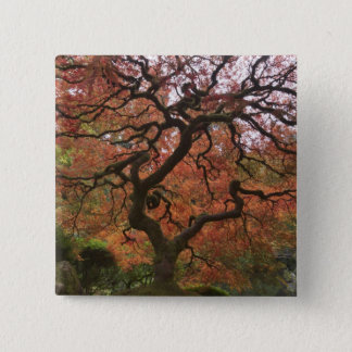 Japanese maple in fall color 5 15 cm square badge