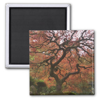 Japanese maple in fall color 5 magnet