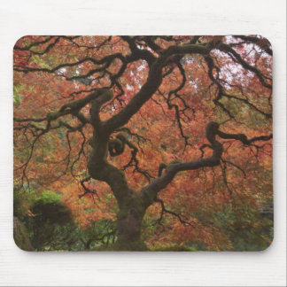 Japanese maple in fall color 5 mouse mat