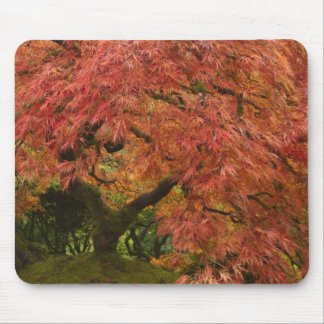 Japanese maple in fall color mouse pad