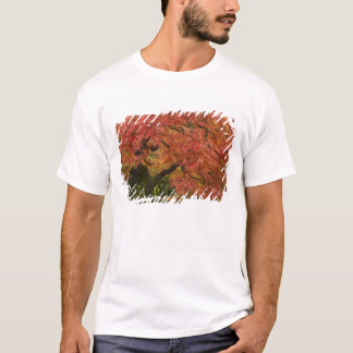 Japanese maple in fall color T-Shirt