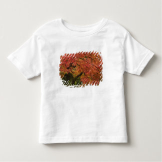 Japanese maple in fall color toddler T-Shirt