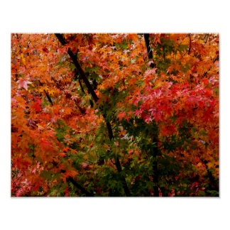 Japanese Maple in Fall Poster