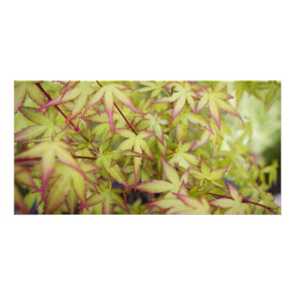 Japanese Maple Leaves Blank Card Photo Cards