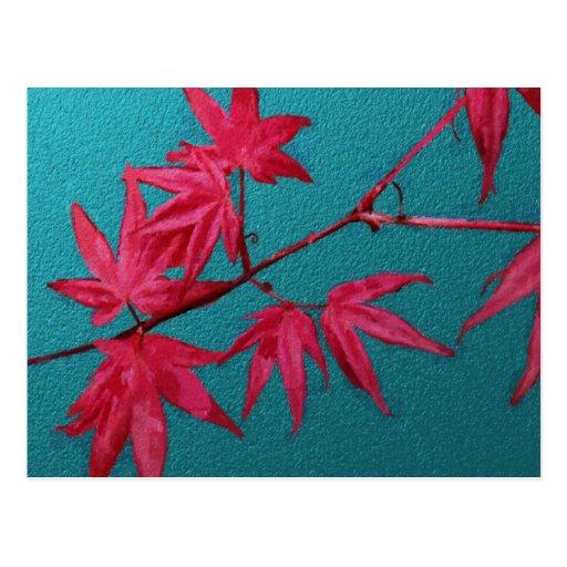 Japanese Maple Post Card