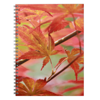 Japanese Maple Spiral Note Books