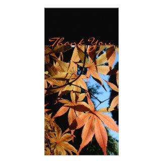 Japanese maple Thank you Photo card