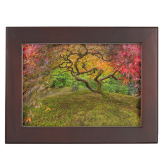 Japanese maple tree in autumn color keepsake box