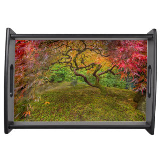 Japanese maple tree in autumn color serving tray