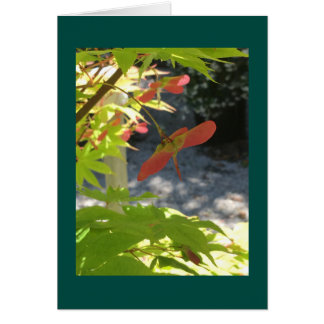Japanese maple with teal border card