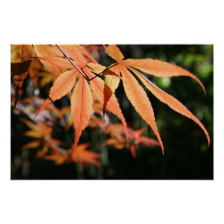 Japanese Maples 7 Floral Photography Poster