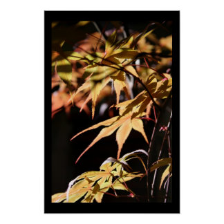 Japanese Maples 8 Floral Photography Poster