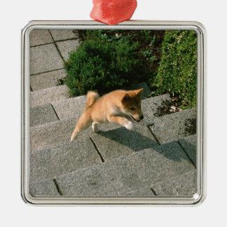 Japanese Midget Shiba 3 Christmas Ornament