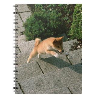 Japanese Midget Shiba 3 Notebooks