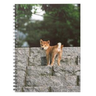 Japanese Midget Shiba 4 Notebook