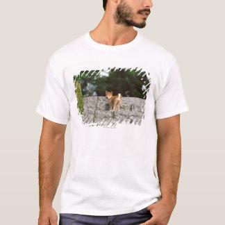 Japanese Midget Shiba 4 T-Shirt