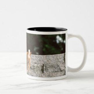 Japanese Midget Shiba 4 Two-Tone Coffee Mug