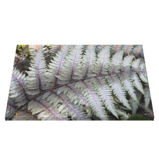 Japanese Painted Fern Floral Canvas Print