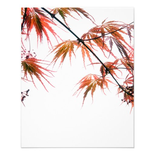 Japanese Red Maple Art Photography Full Color Flyer
