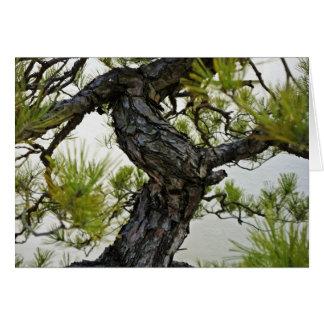 Japanese Red Pine Bonsai Tree Greeting Cards
